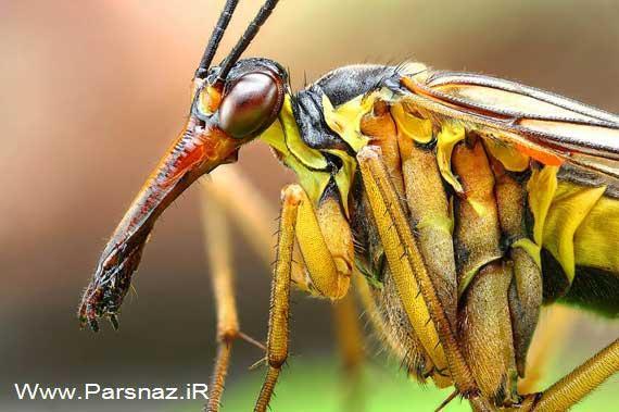 اطلاعات جالب و عکس های دیدنی از چشم حشرات