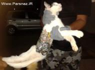 گربه ای که نگهبانان زندان را شوکه کرد!! (عکس)