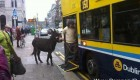 ورود جنجالی این مرد و الاغ اش به اتوبوسی در ایرلند (عکس)