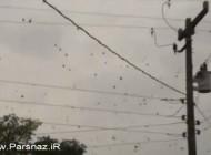اتفاق عجیب و باورنکردنی باران عنکبوت در آسمان (عکس)