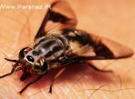 لحظه فرو کردن نیش حشرات درون بدن انسان (عکس)