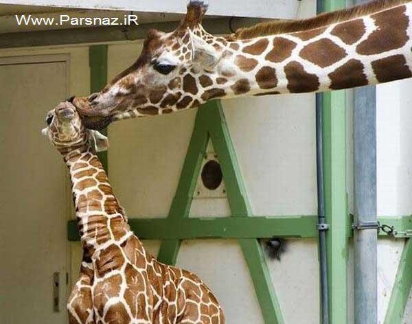 عکس هایی از بوسه های عاشقانه در ملاعام