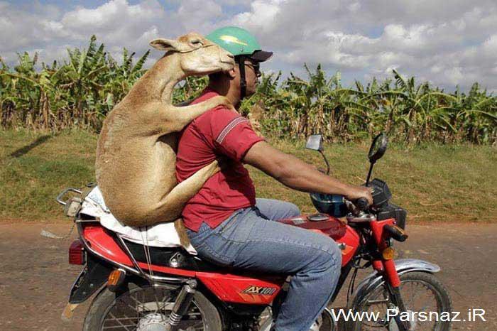 عکس های بسیار خنده دار و دیدنی از کارهای عجیب