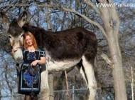 بزرگترین خر دنیا در تگزاس ماله این خانم است (عکس)