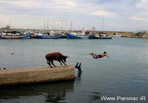 عکس های خنده دار از کشورهای مختلف جهان
