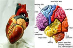 آیا شما با قلب عاشق می شوید یا با مغز..؟