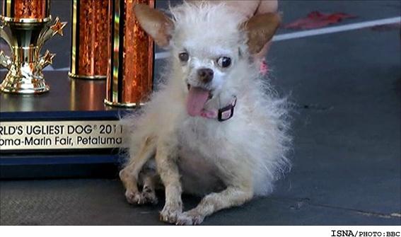 معرفی زشت ترین سگ دنیا در آمریکا..(عکس)