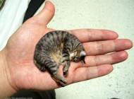 کوچکترین گربه دنیا..!