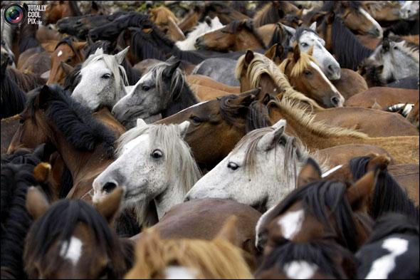 تصاویری از جشنواره اسب های وحشی..!