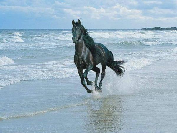 عکسهایی از حیوانات زیبا