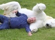 یک مربی شجاع که خرس های قطبی را آموزش می دهد..(تصاویر)