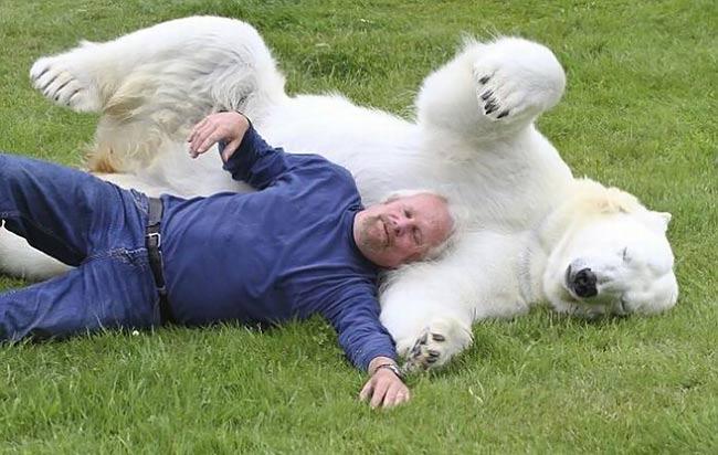 نمایش پست :یک مربی شجاع که خرس های قطبی را آموزش می دهد..(تصاویر)