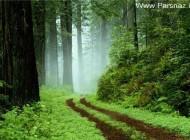 عکس جالب از تونل جنگلی رویایی در ایران