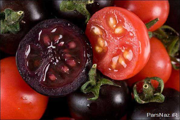 تا حالا گوجه فرنگی بنفش دیده بودید؟ (عکس)