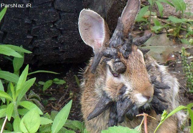 تومورهای شاخی در خرگوش (عکس)
