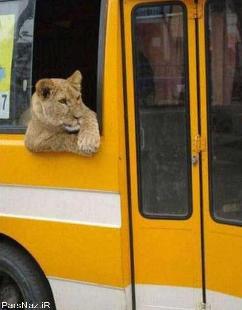 عکس های فوق العاده خنده دار و باحال