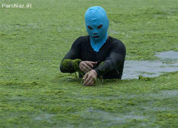 شنای عجیب جلبکی (عکس)