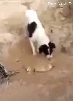 درس بزرگ یک سگ ولگرد برای انسان ها (عکس)