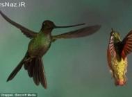 جنگ پرندگان (عکس)