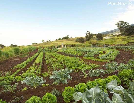 تصاویری از مزرعه شخصی اپرا (عکس)