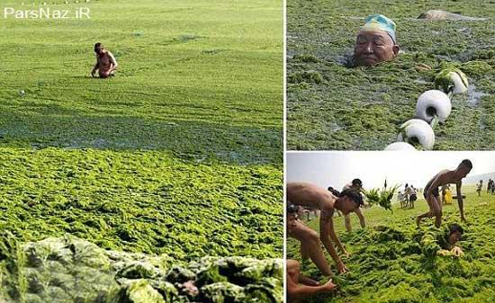 غوطه ور شدن در دریاچه جلبکی (عکس)