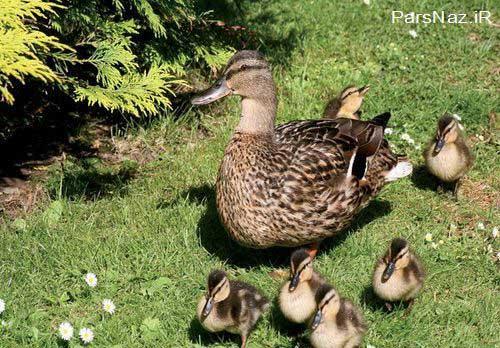 عشق مادرانه در دل طبیعت (عکس)