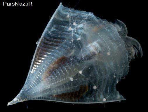موجودات عجیب در اعماق اقیانوس پر رمز و راز