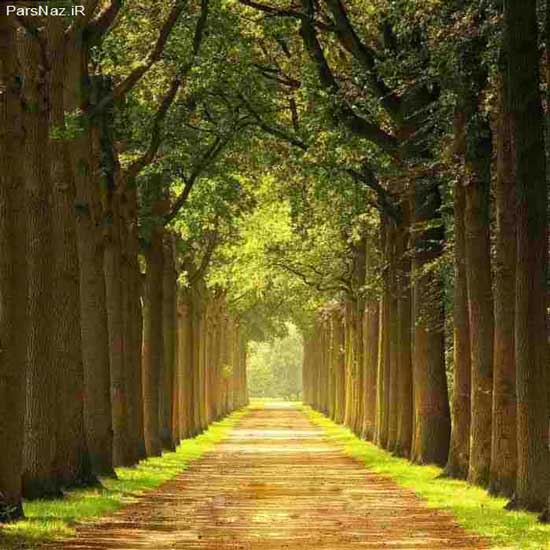 جاده های رویایی در دل طبیعت (عکس)