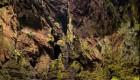 جنگل های پنهان چاله ای (عکس)