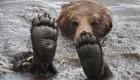 آب تنی آکروباتی خرس قهوه ای (عکس)