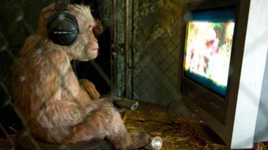 این ها میمون هستند یا آدم؟ (عکس)