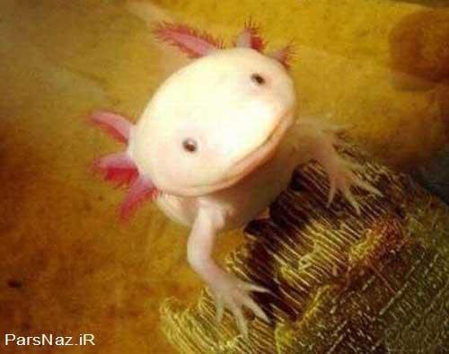 ماهی خوش خنده (عکس)