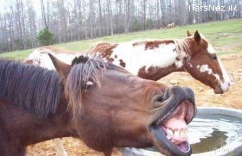 عکس با موضوع خنده های زیبا