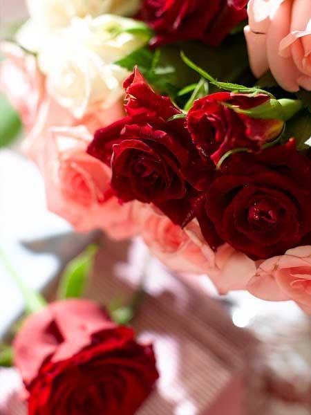نمونه ای از رمانتیک ترین گل های رز (عکس)