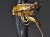 پشه های بسیار جالب در دنیا (عکس)