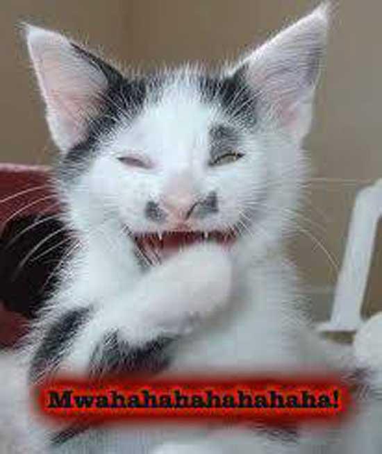 عکس های بمب خنده و باحال