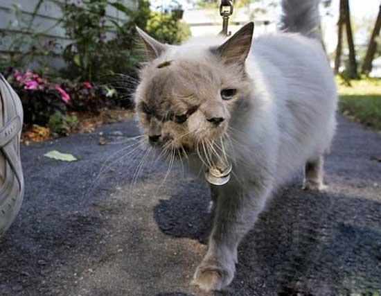 گربه ای عجیب و خارق العاده (عکس)
