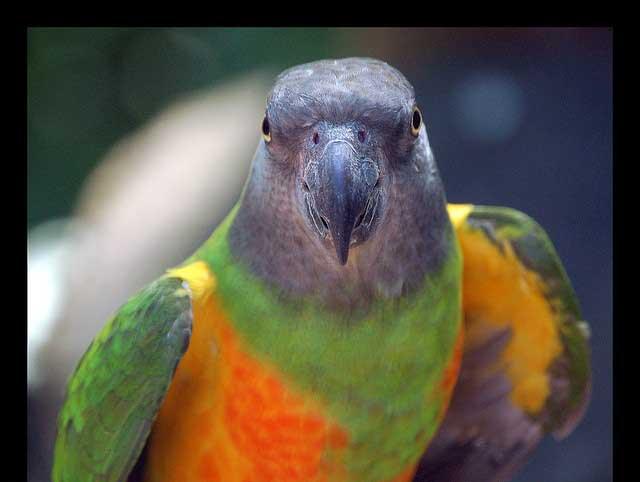 تصاویری از زیباترین و شگفت انگیز ترین طوطی ها در دنیا