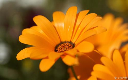 گل های بسیار زیبا و دیدنی (عکس)