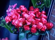 تصاویری از گل های بسیار زیبا و خوش آب و رنگ