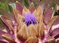 گل های بسیار زیبا و خارق العاده (عکس)