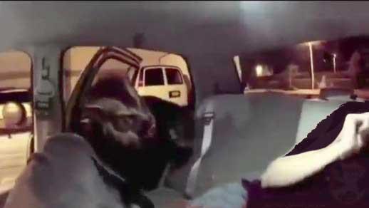 راننده ای که در تاکسی گرگ نما شد ! (عکس)