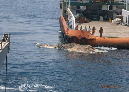 لاشه موجودی ترسناک در وسط دریای خلیج فارس (عکس)