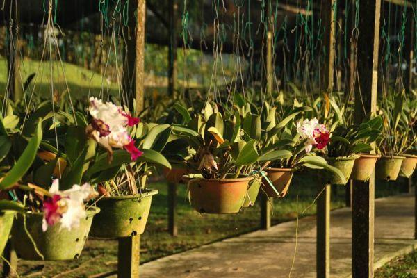 باغ های سرشار از ارکیده (عکس)