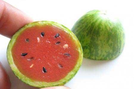 عکس هندوانه های خیلی کوچک 1