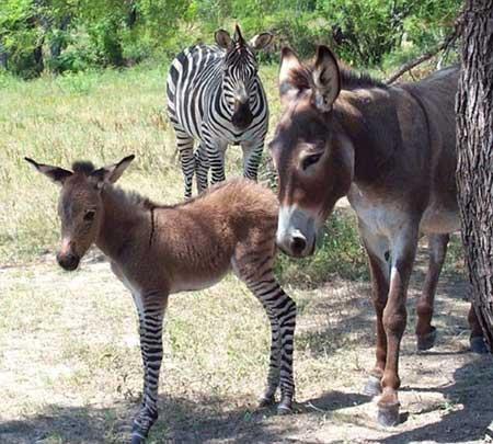 پدر گور خر و مادر خر (عکس)