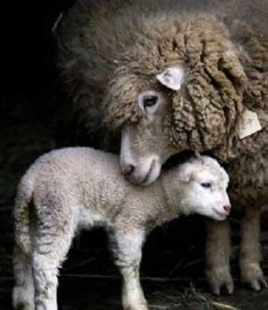 زیباترین احساسات موجود در مهر مادری حیوانات (عکس)