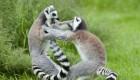 نینجا از جنس  و نوع حیوان (عکس)