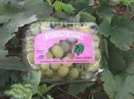 تولید انگور پشمکی ! (عکس)
