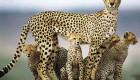 حس مادرانه را در این حیوانات لمس کنید (عکس)